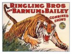 Ringling-Brothers-and-Barnum-Bailey-Circus-Tiger-Posters
