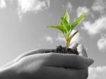 nurture sales leads